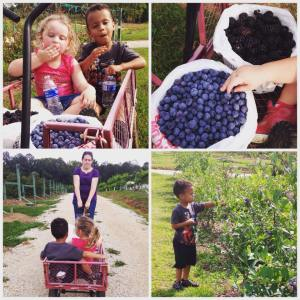 Family Picking 2015