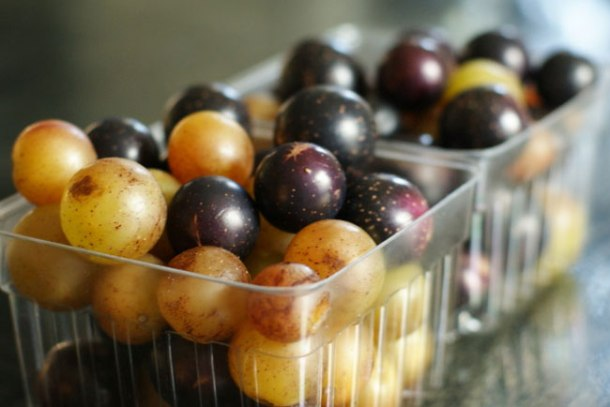 Muscadines-and-Scuppernongs